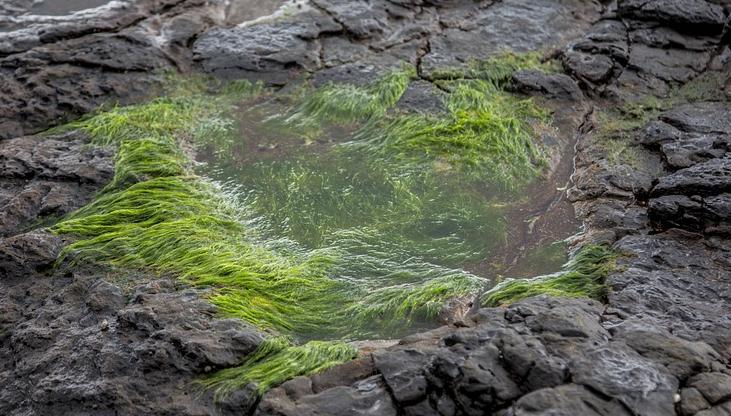 morska-trava